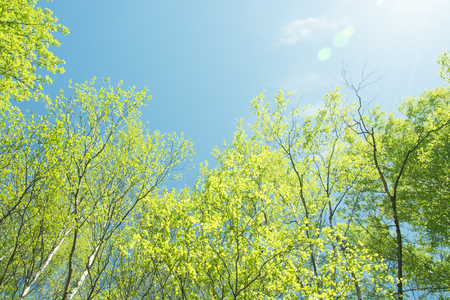 spring panorama of a scenic forest of trees with fresh green leaves and the sun casting its rays of light through the foliage Stock fotó