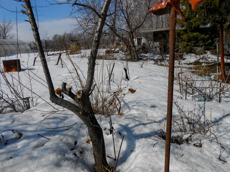 the beginning of spring, pulling up the ice crust on the snow, countryside, bare trunks of birches, twigs of bushes in thawed, traces