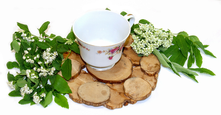 white Rowan flowers and fresh leaves, juniper stand under a hot, porcelain couple cup and saucer isolated