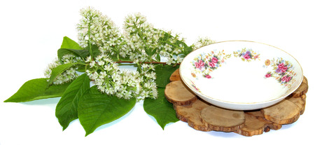 juniper stand under a hot, porcelain couple cup and saucer, flowering branch of white cherry isolated