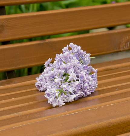 branch of large Purple flowers lilac  a wooden bench 版權商用圖片 - 125472561