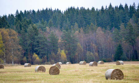 Cropland in the autumn