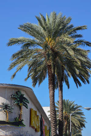 Building and palm