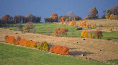 cropland: Autumn