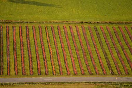Cropland in autumn