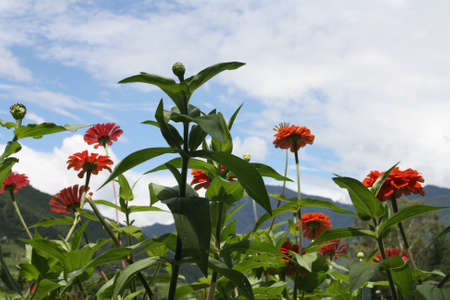 Flowers and blue sky at Paro valley 免版税图像