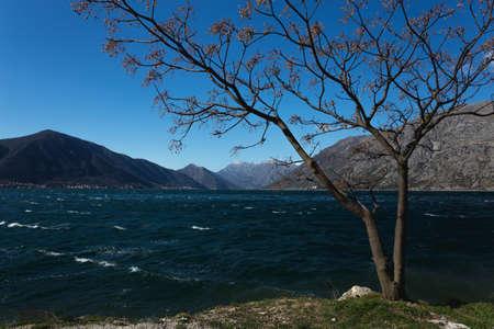 boka: Tree on the windy day in Boka, Montenegro
