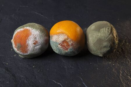 Concept. Improper storage of citrus fruits. Comparison of fresh and rotten fruit in the same row. Archivio Fotografico