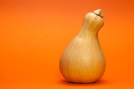 One pumpkin-nut squash pear-shaped on an orange background. Horizontal orientation. Imagens