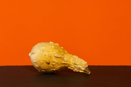 Dried up Butternut squash on an orange background. Copy space.