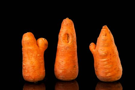 Strange carrots. Three ugly carrots with unusual shapes are arranged in a row on a black background. Horizontal orientation.