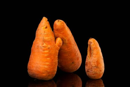 Three funny ugly carrots on a black background. Misshapen produce, food waste problem concept. Minimal style, pop art.