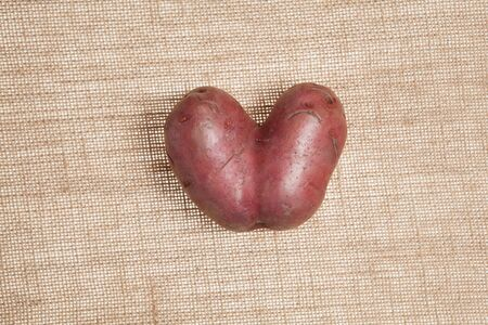 One funny heart-shaped potato on burlap background. Closeup. Ugly vegetables.