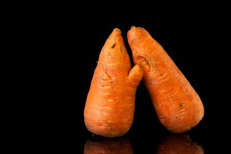 Ugly shaped carrots on a black background. Funny, abnormal concept of plant or food waste. Horizontal orientation.