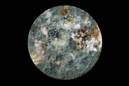 Abstract pandemic model. Infected planet. Rapid spread of coronavirus COVID-19. Copy space. 版權商用圖片