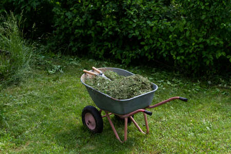 Wheelbarrow with grass and leaves. On top are garden shears. Gardening. Planting care. Seasonal trimming of trees, bushes and other perennial plants. Archivio Fotografico