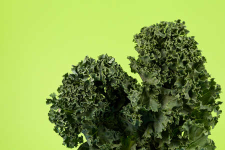 Organic kale (Italian kale, Tuscan kale, dinosaur kale, lacinato) on a delicate green background with place for text. Cabbage leaves, close up.
