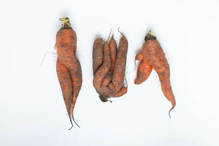 Three conjoined dirty carrots. Ugly vegetables. Concept - Food waste reduction. Using in cooking imperfect products. 免版税图像