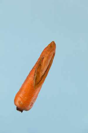 Unusual vegetables. Ugly carrot with flaws on a light blue background with copy space. Concept - Food waste reduction. Using in cooking imperfect products.