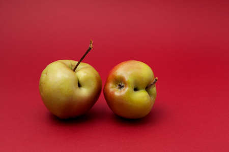 Two green ugly apples with flaws on red background. Selective focus, copy space. Concept - Food waste reduction. Using in cooking imperfect products.