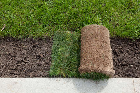 Rolls of turf or turfgrass, close-up. Landscaping of territory in the park.