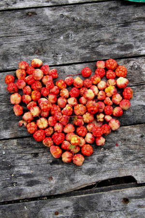 chicout�: the cloudberry from the island in the White sea