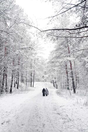 gaffer: winter forest