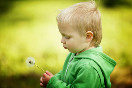 cute little boy with dandelion photo