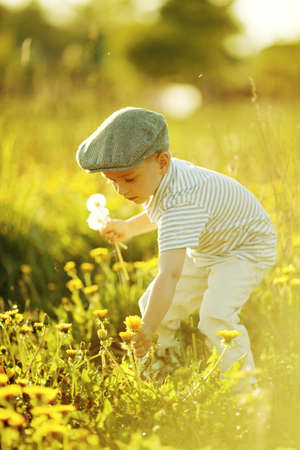 cute little boy with dandelions Stockfoto