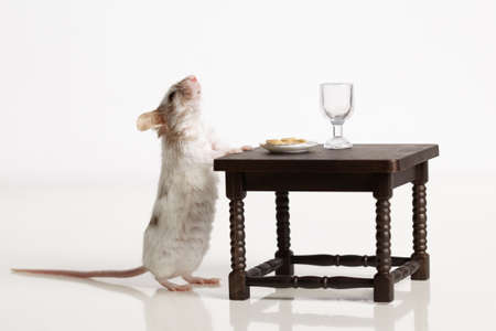 caudal: Mouse dines at the table