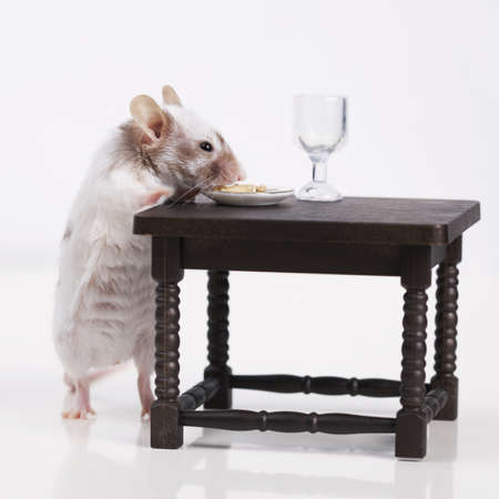 caudal: Little mouse dines at the table