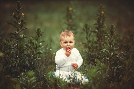 little funny boy sitting in grass with strawberry photo