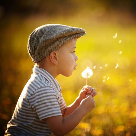 cute little boy with dandelions Banque d'images