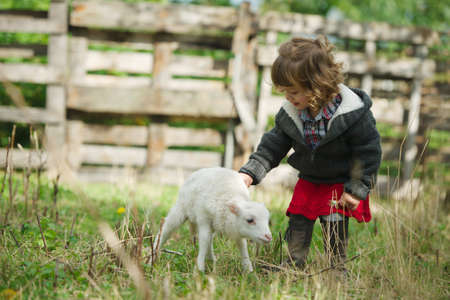 little girl with lamb on the farm 스톡 콘텐츠