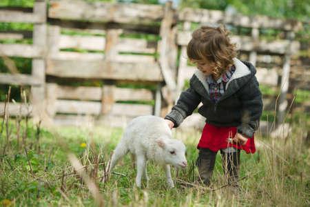 little girl with lamb on the farm Standard-Bild