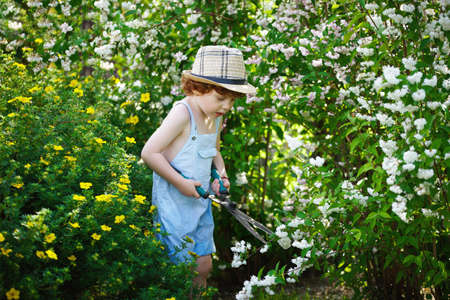 off cuts: little boy cuts off branches of the shrub shears