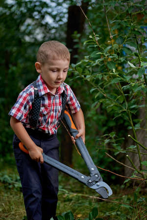 off cuts: boy cuts off branches of the shrub shears