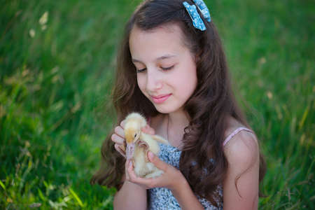 yellow duckling: young girl with little yellow duckling in summer Park Stock Photo