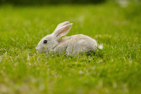 photo of grey rabbit in summer park