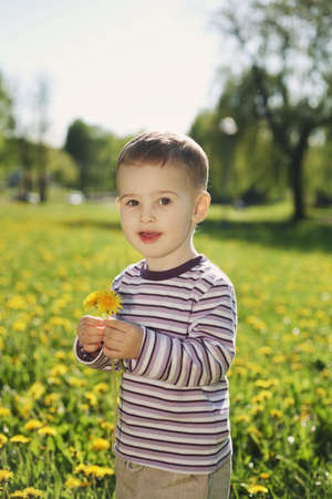 little boy in spring dandelion meadow