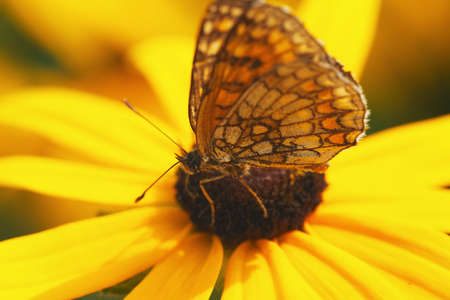 close-up photo of butterfly on yellow flower
