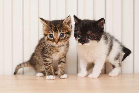 beautiful kitties on bright background