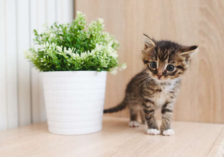 cute kitten with flowerpot