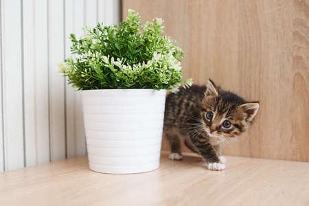 cute little kitten with flowerpot at home