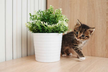 cute little kitten with flowerpot at home