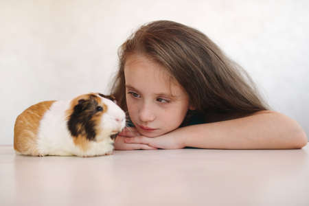 little beautiful girl with guinea pig Banco de Imagens