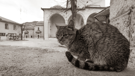 Closeup of cat at the historic centre of Sarajevo, Bosnia and Herzegovina. Black and White