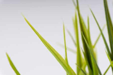 Green grass closeup with selective focus and crop fragment