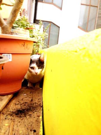 A hidden kitten.