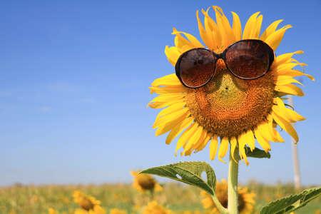 Sonnenblume mit Sonnenbrille  Standard-Bild - 50412533